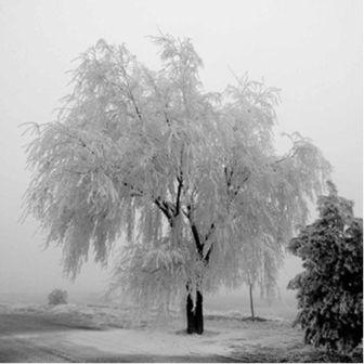 arbol_invierno